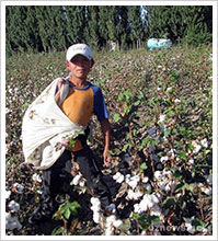 Over one million Uzbek children were forced by their government to pick cotton in the 2012 harvest.